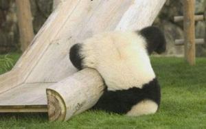 panda-fail_o_154124